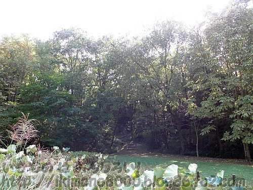河内の里の里山への入り口(東側)
