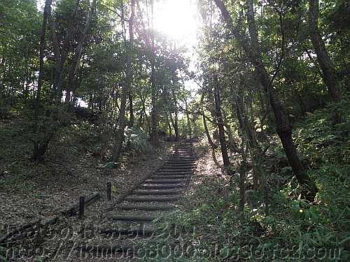 コナラの木に覆われた山辺の道の途中