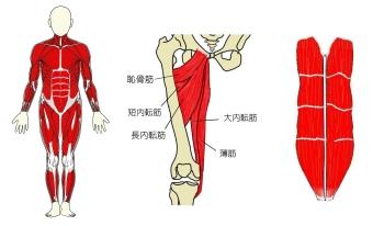 muscles-01.jpg