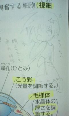 【オリジナル】 錐体細胞たん