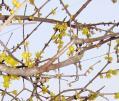 春の探索7-7