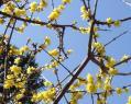 春の探索7-6