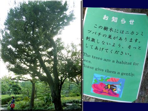 kiyosumi 2