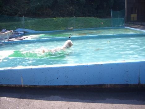 プールばっかり