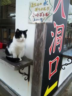 栃木看板ネコ