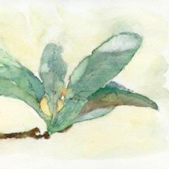 びわの葉と実