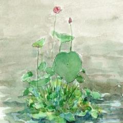 善通寺のハスの花