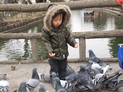 鳥大好き人間のようです