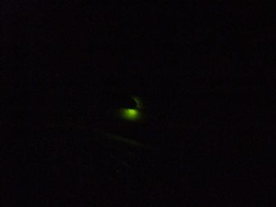 ホタルの光