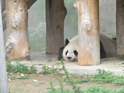 パンダを見てきました!