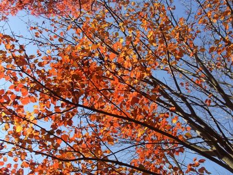 きれぎれの風彩 「ホソエカエデ」1-6