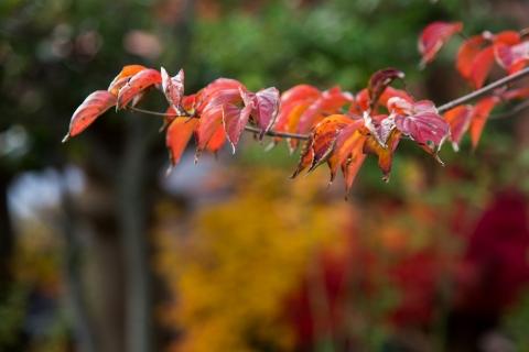 2014 晩秋の庭 EOS6D