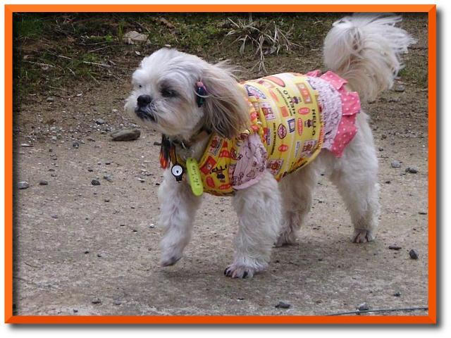 犬服おでかけとにちじょう006