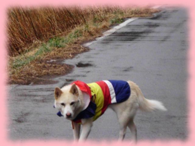 犬服おでかけとにちじょう007