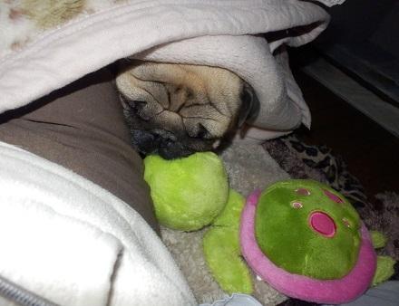 亀枕はいかが?