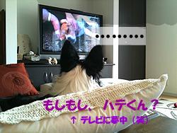 watchtv.jpg