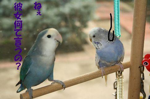 10_20111125001533.jpg