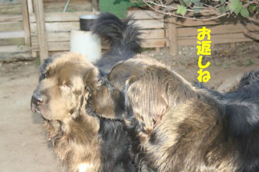 12_20111118010615.jpg