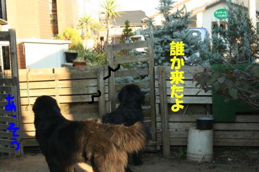 13_20111118010714.jpg