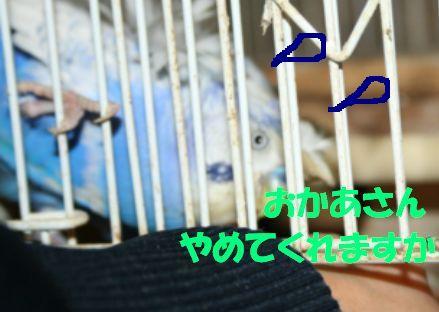 1_20111118231517.jpg