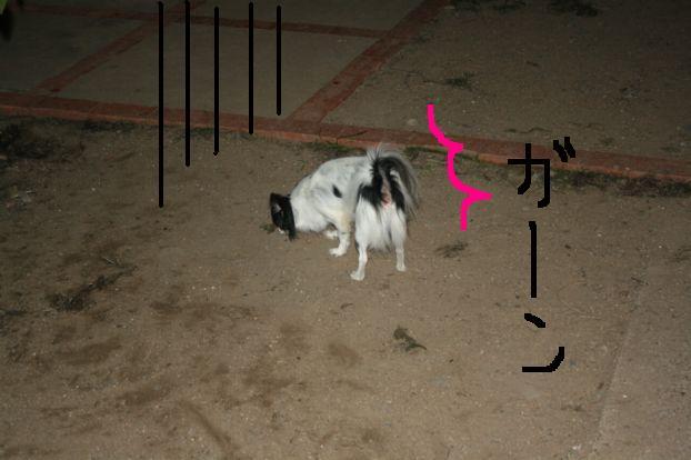 2_20111010215829.jpg