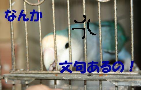2_20111118233456.jpg
