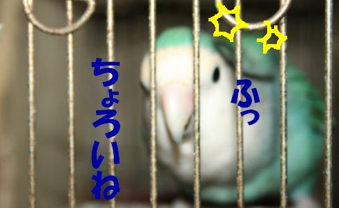 3_20111118233907.jpg