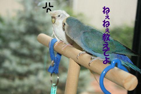 3_20111125000735.jpg