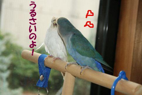 4_20111125000830.jpg