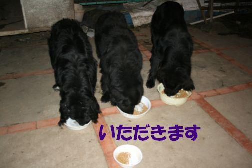 4_20111204225325.jpg