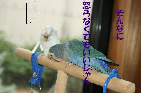5_20111125000914.jpg