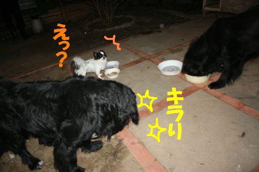 6_20111204225347.jpg