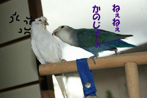 8_20111125001248.jpg