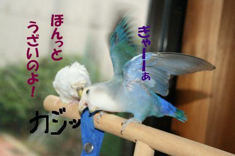 9_20111125001356.jpg