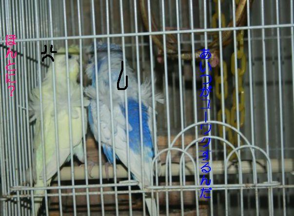 IMG_2913_20111112150109.jpg