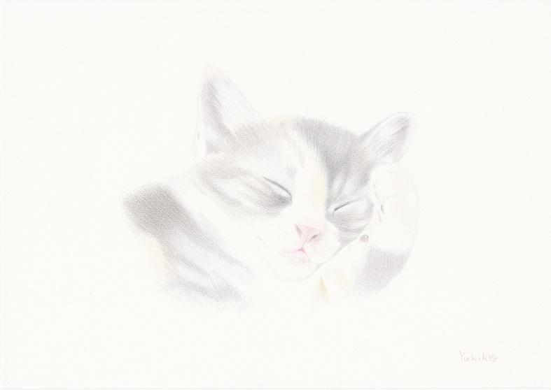 子猫・寝顔