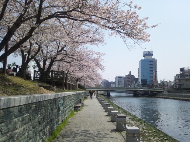 藍場浜公園の桜
