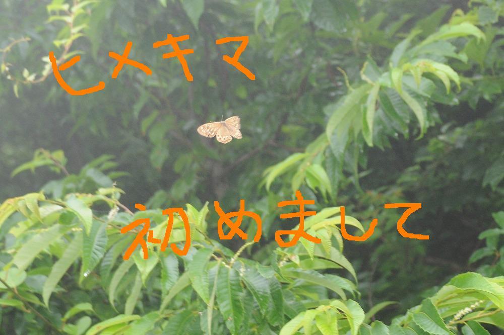 ヒメキマダラヒカゲ 2010.07.06 0936