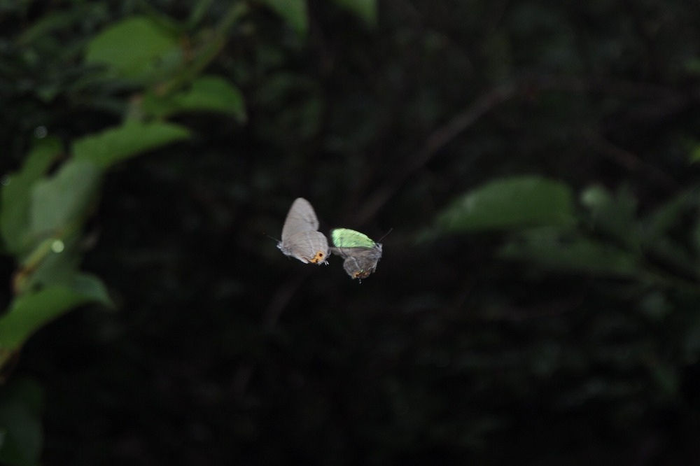 メスアカ 2010.07.06 1027