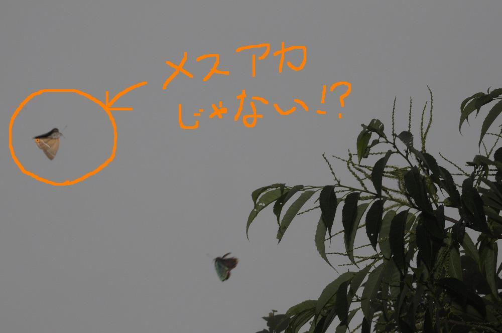 メスアカ 2010.07.06 1004-1