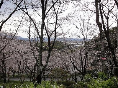 桜と香長平野