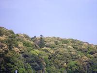 外宮の山並みー1
