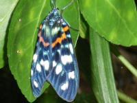 羽化したばかりの蝶!?