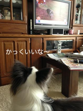 TV見るボー