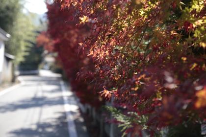 里山散歩3