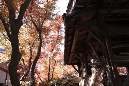 里山散歩6