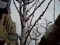 1 buds snow 1