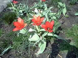 2 flower 9-1
