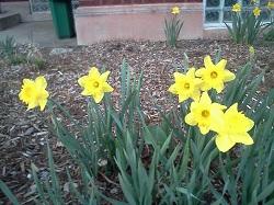 2 flower 3-2