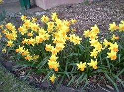 2 flower 3-1